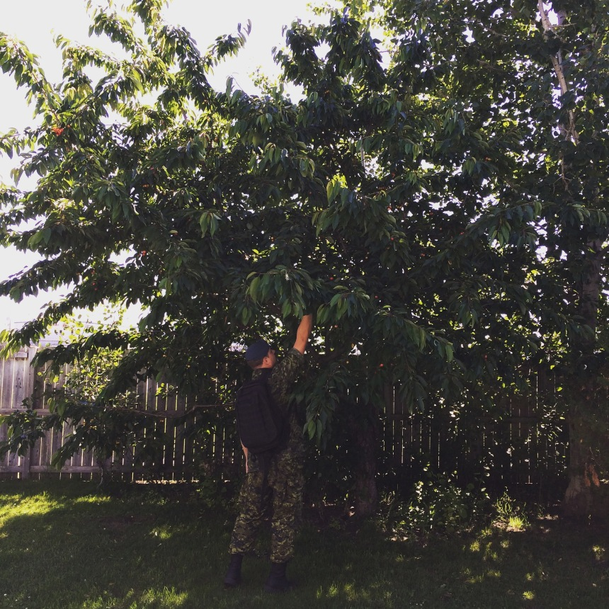 There was backyard cherry picking